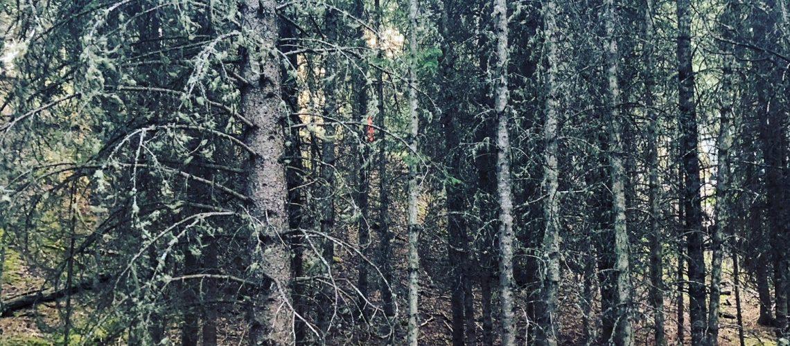 Wireless Broadband in Treed Areas